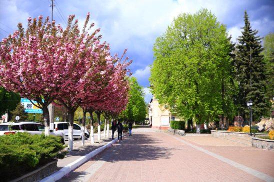Read more about the article Тротуари у Кременчуці ремонтують за європейським стандартом